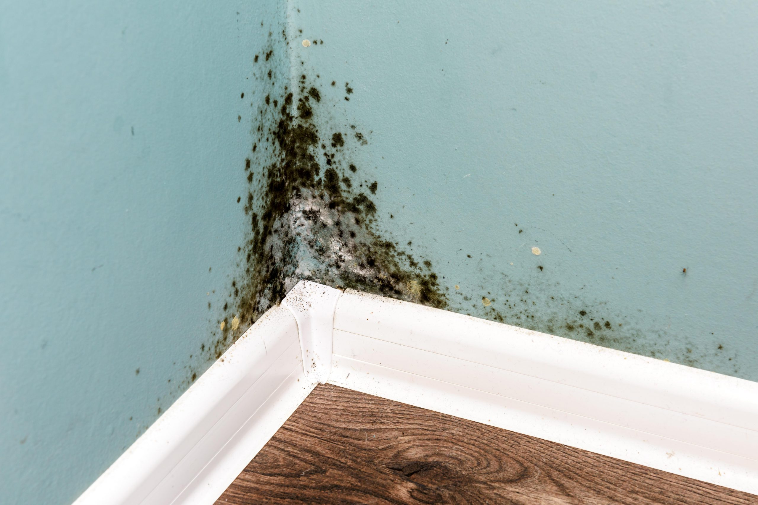 How To Tell If You Have Mold In Your Home Or Office JASD scaled