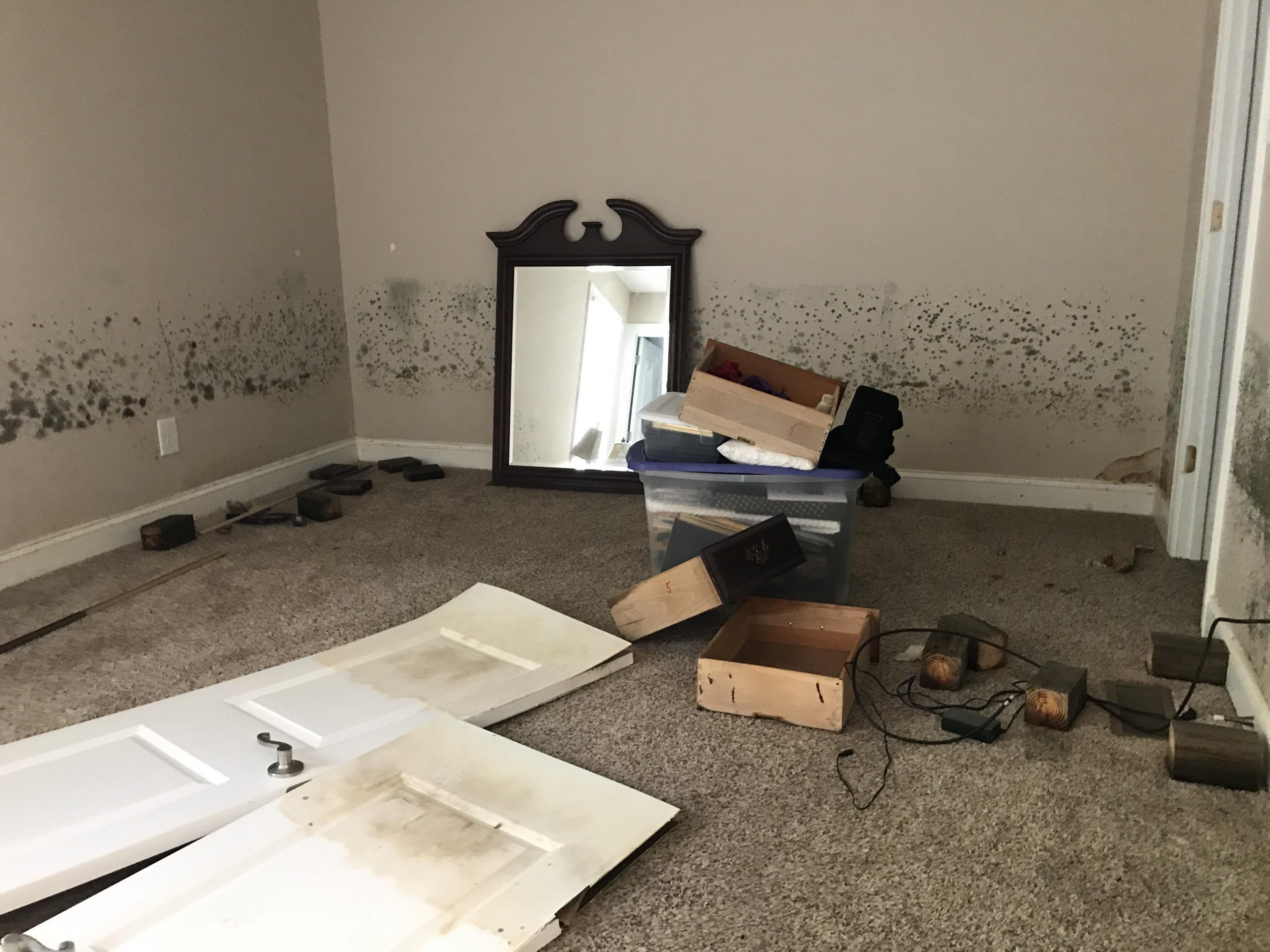 Mold Remediation And Repair South Florida JASD Inc scaled